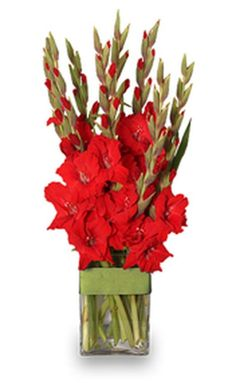 Beautiful Gladiolus Flower Arrangements For Home Decorations 47