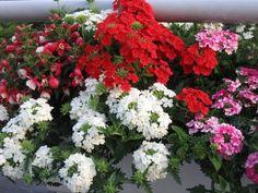Wohnung, Balkon, Blumen