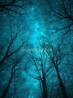 Stars cant Shine Without Darkness Canvas Art Print by Soaring Anchor Designs Night Sky Painting, Galaxy Painting, Tree Silhouette Tattoo, Silhouette Art, Dark Paintings, Dark Forest, Forest Art, Magical Forest, Tree Art