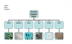 Animal Adaptations project with tech