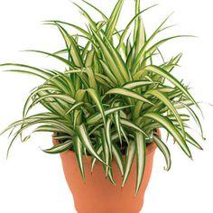 Cinco plantas (para ambientes fechados) que limpam o ar da