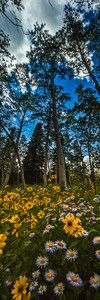 """Summer wildflowers on the transfer trail outside Glenwood Springs Colorado To purchase a print please click the """"buy"""" button on the top right to add the image to the cart - tmophoto landscape and night photography by Thomas OBrien"""