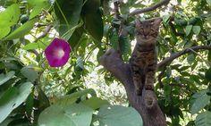 Kokorisko my friend cat