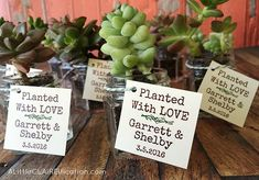 wedding favors + suc