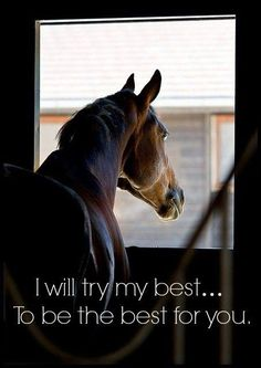 """I will try my best…to be the best for you."" #HorseQuote"