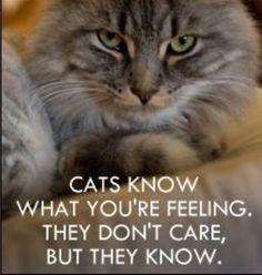 Hahaha! Most cats anyway.   #OhlandtVet