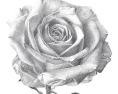 I kinda see my more represented in a rose like this.