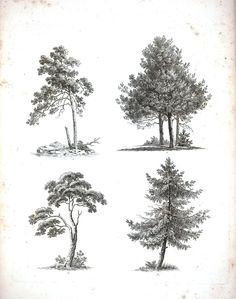 Vintage Printable - free public domain images to download or print.