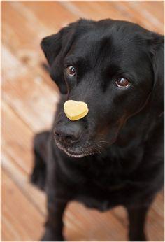 Top 10 Healthy Homemade Dog Treats
