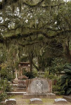 I love old cemeteries. Bonaventure Cemetery, Savannah, GA, was made famous in the movie Midnight in the Garden of Good and Evil. Cemetery Statues, Cemetery Headstones, Old Cemeteries, Cemetery Art, Graveyards, Angel Statues, Bonaventure Cemetery, Southern Gothic, After Life
