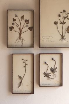 Framed pressed botanicals.