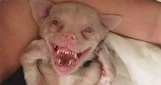 Ce chien unique est en train de devenir une star sur les réseaux sociaux. Un seul coup d'œil vous suffira pour voir pourquoi.