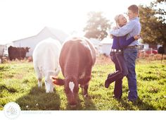 Cattle Engagement Session #Shorthorn #Cattle #StockShowLife // photo by www.lukeandcat.com