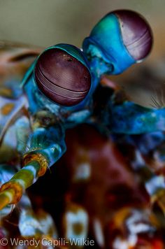 mantis eye by wendymd, via Flickr