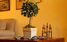 BUXUS Medida: 36cm de alto x 17cm copa Material: Base de Fibrocemento Buxus, Base, Plants, Breakfast Nook, Dried Flower Arrangements, Plant, Planets