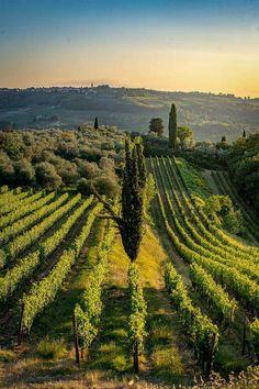 The Lights of Tuscany Sorrento Italy, Naples Italy, Sicily Italy, Tuscany Italy, Capri Italy, Venice Italy, Provence, Venice Travel, Italy Travel