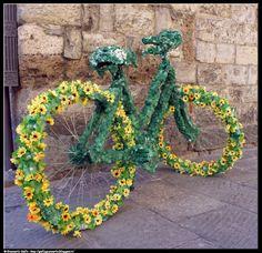 Bicicletta - photographic processing (190) Etichette: 2015, Albenga, bicicletta, cerchione, elaborazione, erbe, erbe aromatiche, fior d'albenga, fotografia.