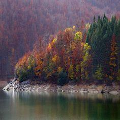 El bosque Irati en el norte de España  vía 500px.com