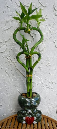 Valentine's Day Lucky Bamboo Tall 2 Heart by HoneyBeadsJewels, $29.99