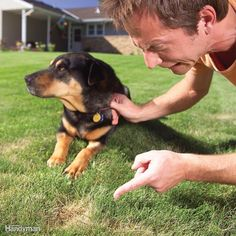 smart tips all pet owners should read pet care training spot lawn lawn