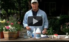 Off The Grid News, Pest Management, How To Get Rid, Pest Control, Ants, The Secret, Herbs, Top Ten, Homesteading