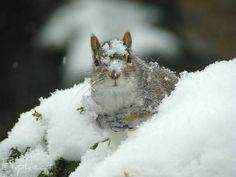 animals-snow-11.jpg (500×375)