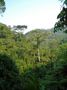 bwindi impenetrable national park uganda - Google Search