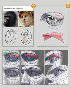 Man eye from Anatomy for Sculptors Eye Anatomy, Facial Anatomy, Human Body Anatomy, Anatomy Poses, Anatomy Art, Anatomy Sketches, Anatomy Drawing, Guy Drawing, Figure Drawing