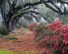 Beautiful natural landscaping