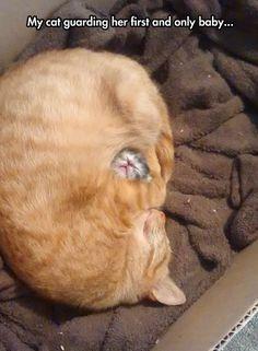 Cat Mother