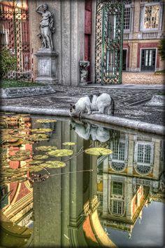 cat drinking from plaza fountain, Genova Italy