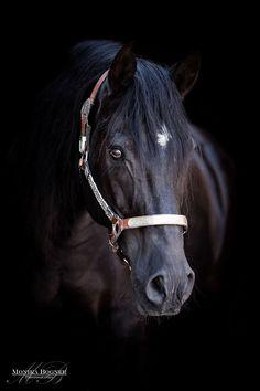 Klassische Pferde-Portraits - Monika Bogner Photography - Pferdefotografie und Hundefotografie in Bayern