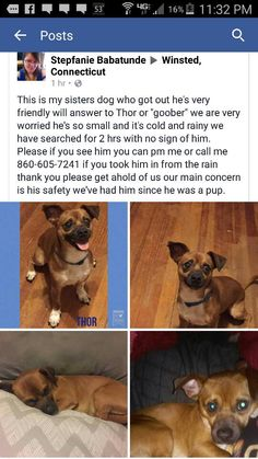 CT Lost Pets Page Liked · April 11 near Bristol · Edited  ·   Update: Reunited!  Missing in Winsted  https://www.facebook.com/groups/216367391833532/permalink/738066516330281/