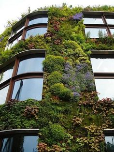 Green living walls for buildings. Flourishes in rain and sunshine! #greenroofs #greenliving