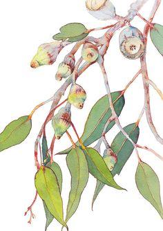 Eucalyptus watercolour print - botanical wall art print of Australian native gum tree branch - vertical print A4 - nature picture