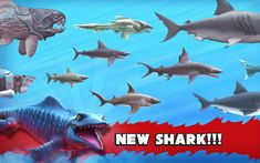 Hungry Shark Evolution Hack APK Download for Android from here. Get the Unlimited Coins and Gems for free from here and get the latest APK file installed on.