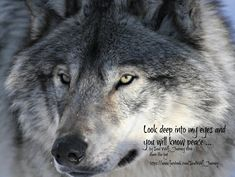 Look Deep Into My Eyes and You Will Know Peace--Soul Wolf Journey Photo
