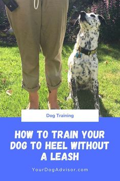 Training your dog is about building your relationship with your dog as well as establishing boundaries. Be firm yet consistent and you will see incredible results when it comes to your dog training efforts. Leash Training, Training Your Puppy, Dog Training Tips, Potty Training, Training Quotes, Agility Training, Training Schedule, Toilet Training, Training Collar