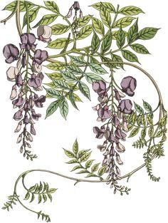 Original 1896 Grasset Art Nouveau Pochoir Floral prints For Sale Vintage Botanical Prints, Botanical Drawings, Botanical Art, Vintage Art, Art And Illustration, Illustrations, Art Floral, Floral Prints, Art Nouveau Pattern