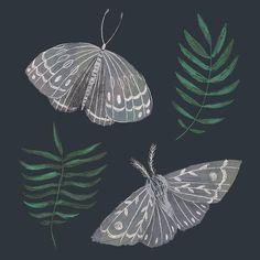 Lace moths for day 28 of #100daysofmagic (this challenge feels a bit never ending for me 😅) . . . . #illustration #illustratorsofinstagram…