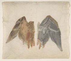Anonymous, Bittern's Wings: a study showing both sides, in the manner of Albrecht Dürer (1515) via metmuseum