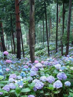 Wow, love this forest in Japan