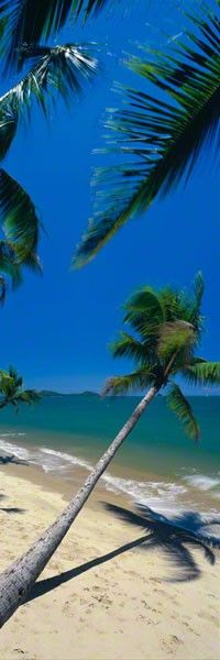 Swaying Palms  CLICK THIS PIN if you want to learn how you can EARN MONEY while surfing on Pinterest