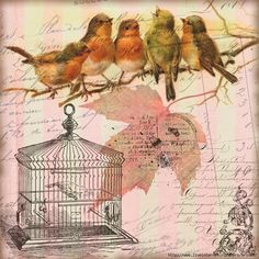 vintage birdcage and birds