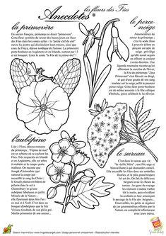 Dessin des fleurs avec leur légende, à colorier