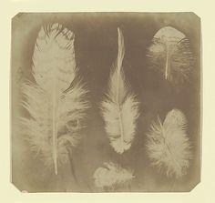 Nevil Story Maskelyne, 1840, Photogenic drawing negative