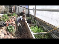 Build a worm farm in the pathways of your greenhouse or garden
