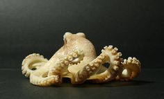 The upper part of the octopus - Urushi lacquer and Yashabushi. The lower part of the octopus and shells were covered with an incredibly huge amount of points made with a hot needle. by Natasha Popova carved from petrified mammoth ivory.