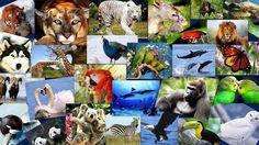 biodiversidad - Buscar con Google