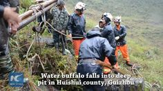 A buffalo falls into a deep pit in Huishui county in southwest China's Guizhou Province. It was rescued hours later by firefighters with ropes and pulleys.